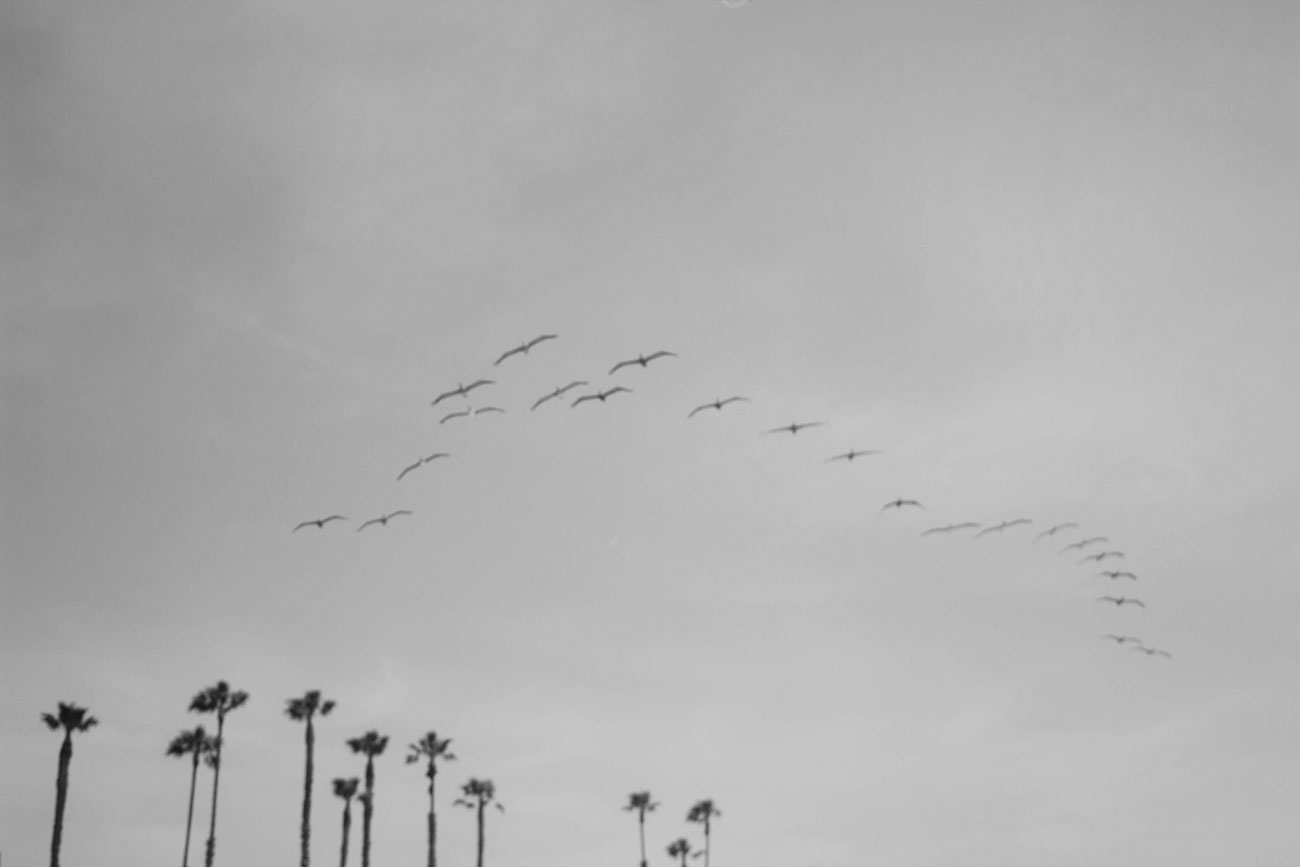 Los Angeles Seagulls - Kirsten Whitney 2