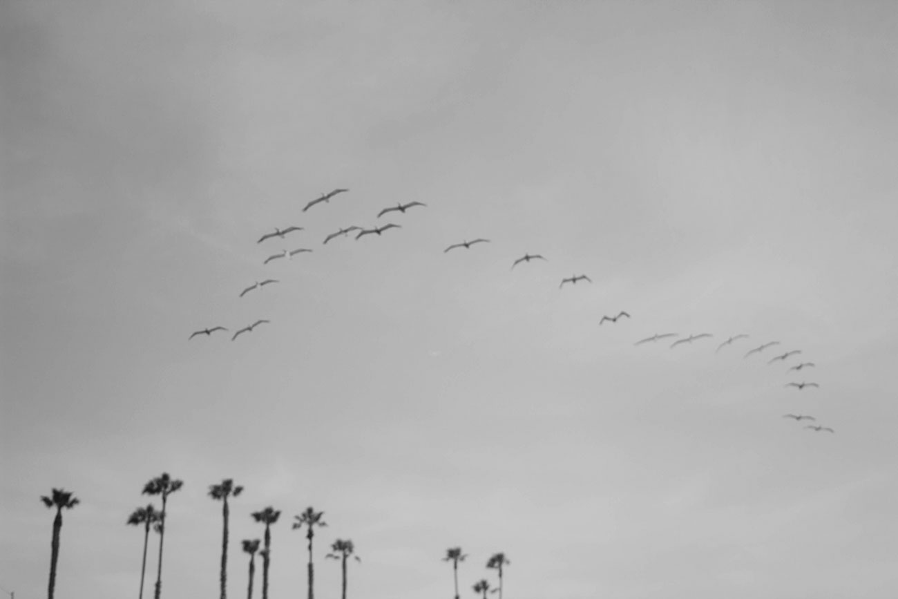 Los Angeles Seagulls - Kirsten Whitney 3