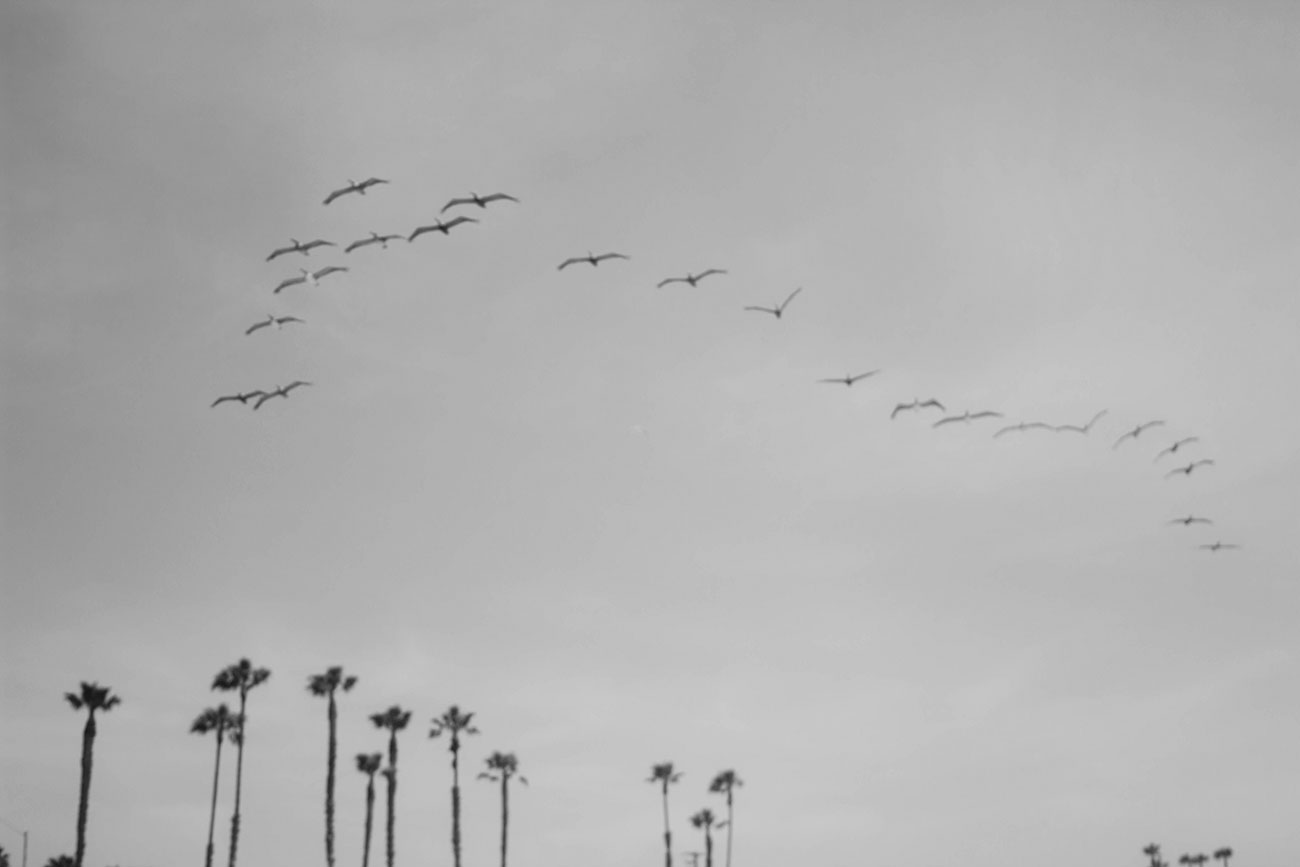 Los Angeles Seagulls - Kirsten Whitney 4