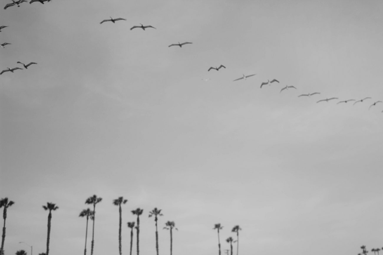 Los Angeles Seagulls - Kirsten Whitney 5
