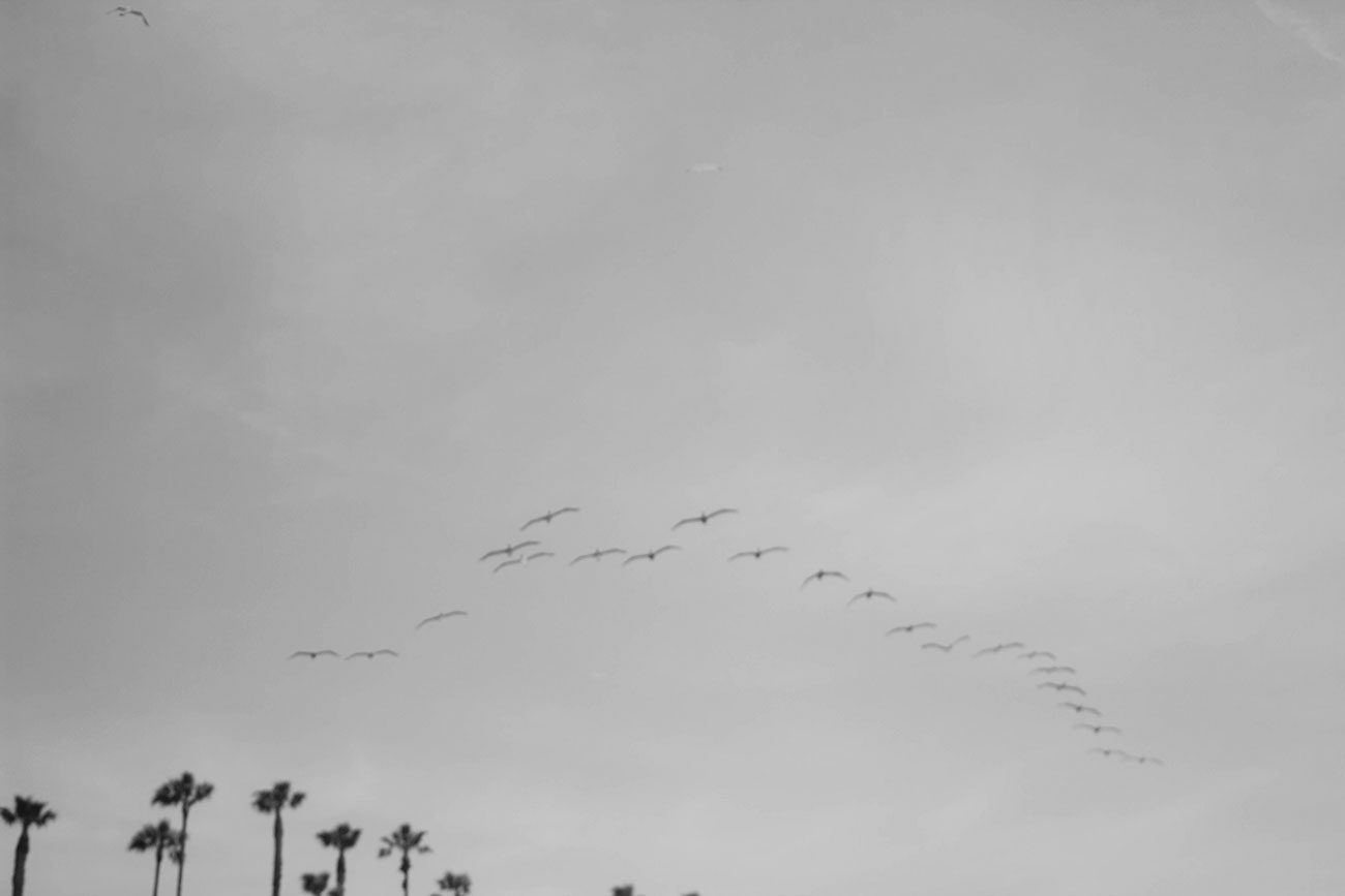 Los Angeles Seagulls - Kirsten Whitney